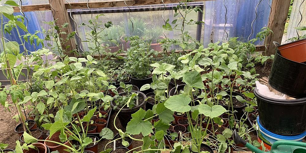 Manyplants